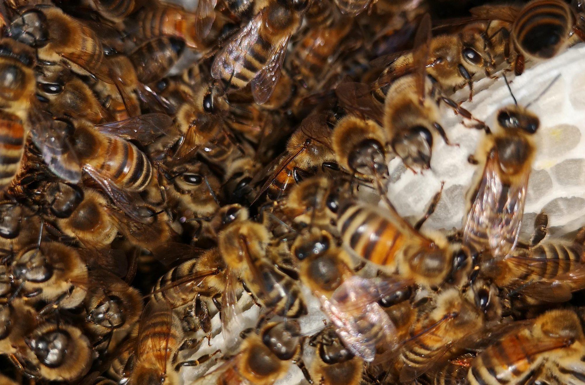 proApia pro abeilles